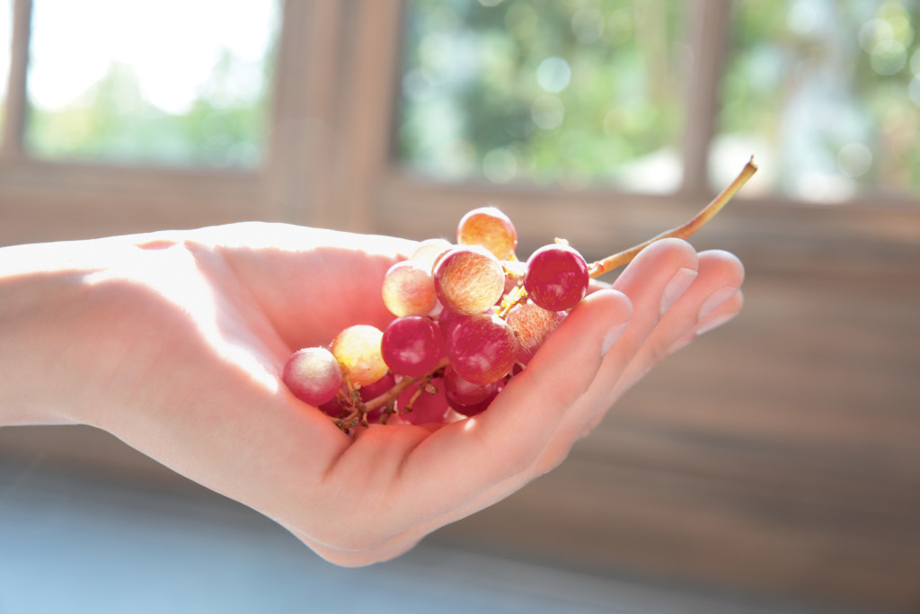 3540-Red_Grape-Hand